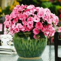 Заказ почтой комнатных цветов совхоз имени ленина цветы купить