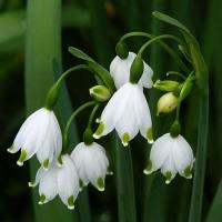 Купить почтой луковичные цветы осень недорого какой сделать подарок папе на юбилей