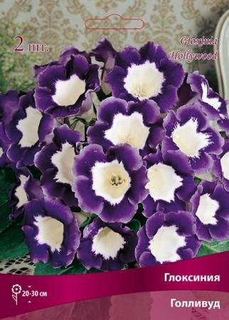 Цветы глоксиния махровые клубни купить в москве цветы с доставкой в городе ивантеевка